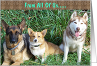 From All Of Us Dogs card