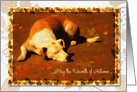Thanksgiving - Autumn Leaves with Dog Sunbathing card