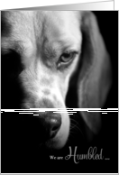 Pet Sympathy Loss of a Dog - Beagle Black and White card