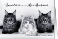 Triplet Congratulations New Great Grandparents - Tabby Cats card