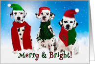 Christmas Dalmatian Dogs Merry & Bright card