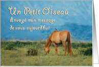 Vous penser � French Thinking of You Card Horse card