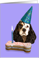 Happy Birthday Card - featuring a parti-tri American Cocker Spaniel card