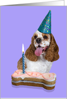 Happy Birthday Card - featuring a red/white parti American Cocker Spaniel card