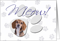 April Fool's Day Greeting - featuring a Beagle card