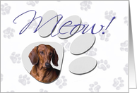 April Fool's Day Greeting - featuring a red Dachshund card