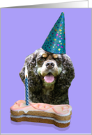 Birthday Card featuring an American Cocker Spaniel card