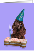 Birthday Card featuring a chocolate American Cocker Spaniel card