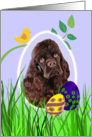 Easter Card featuring a chocolate American Cocker Spaniel card