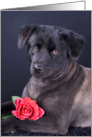 All Occasion Greeting Card featuring a Chow Mix with a Rose card