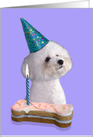 Birthday Card featuring a Bichon Frise card