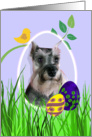 Easter Card featuring a Miniature Schnauzer card