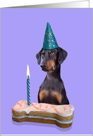Birthday Card featuring a Doberman Pinscher (with natural ears) card