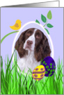 Easter Card featuring a liver English Springer Spaniel card