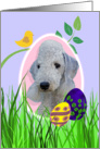 Easter Card featuring a Bedlington Terrier card