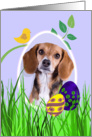 Easter Card featuring a Beagle card