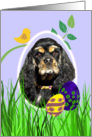 Easter Card featuring a tri-colored American Cocker Spaniel card