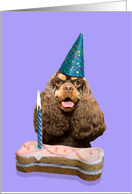 Happy Birthday featuring a chocolate/tan American Cocker Spaniel card