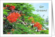 Go Green, Flame Tree card
