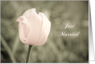 Pink Tulip Just Married announcement Card