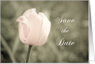Pink Tulip Engagement Party Save the Date Card