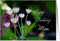 Happy Birthday Mom from Daughter - Garden Flowers card