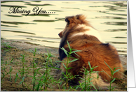 Missing You, dog(Sheltie) card