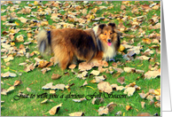 Just To Wish You A Glorious Fall Season, dog(Sheltie) card