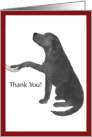 Thank You - Black Lab Dog Puts Paw in Hand card