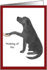 Thinking of You - Black Lab Dog Puts Paw in Hand card