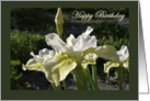 Yellow & White Iris in Spring Garden card
