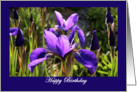 Dark Blue Iris in Spring Garden card