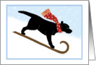 Christmas Black Lab Sled Dog Winter Holiday card