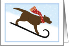 Christmas Chocolate Lab Sled Dog Winter Holiday card