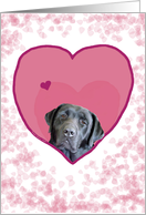 Black Labrador Heart Dog card