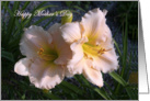 Foster Mother's Day Pink Daylily Flowers in Spring Garden card