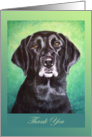 Thank You Black Labrador Dog Painting card