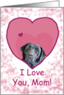 Birthday Love Mom Black Lab in Heart card