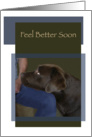 Feel Better Soon Chocolate Labrador Dog Head on Knee card