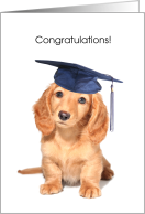 Congratulations, Grandson Getting Diploma, dog card
