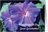 Mother's Day / Great Grandmother card