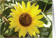 Get Well / Hip Replacement, humor, sunflower card