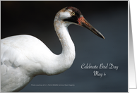 Bird Day, May 4, Whooping Crane card