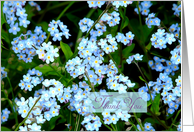 Thank You For Your Sympathy Forget Me Not Flowers card