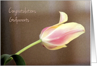 Godparents Wedding Congratulations, Pink Tulip card