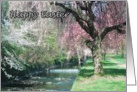 Happy Easter Cherry Trees in the Park card