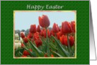 Happy Easter Garden of Red and White Tulips card