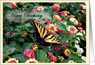 Happy Birthday Yellow and Black Butterfly in Garden card