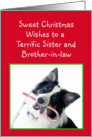 Australian Shepherd Sweet Christmas, Sister and Brother-in-law card