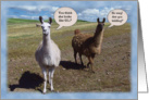 Lamas humorous 50th Birthday card